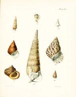 Seashell_31