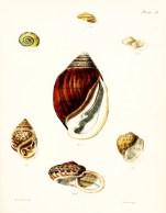 Seashell_8