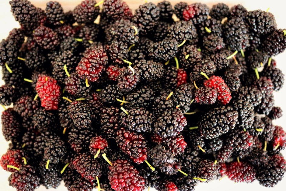 dried mulberries pic