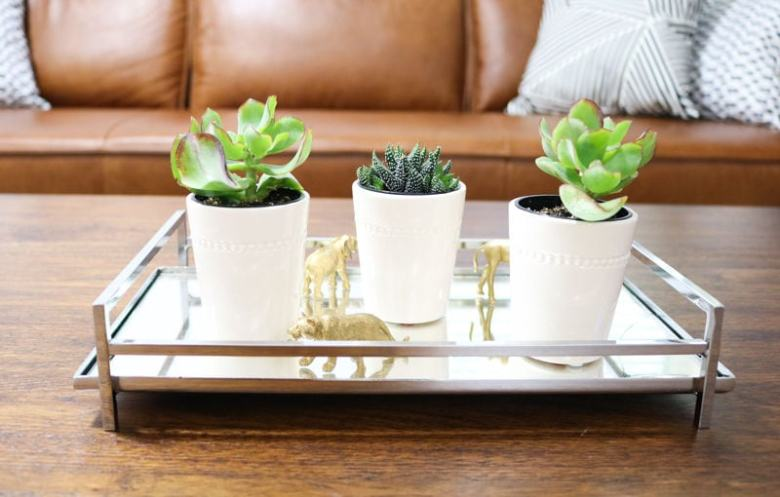 succulent plants on coffee table in living room