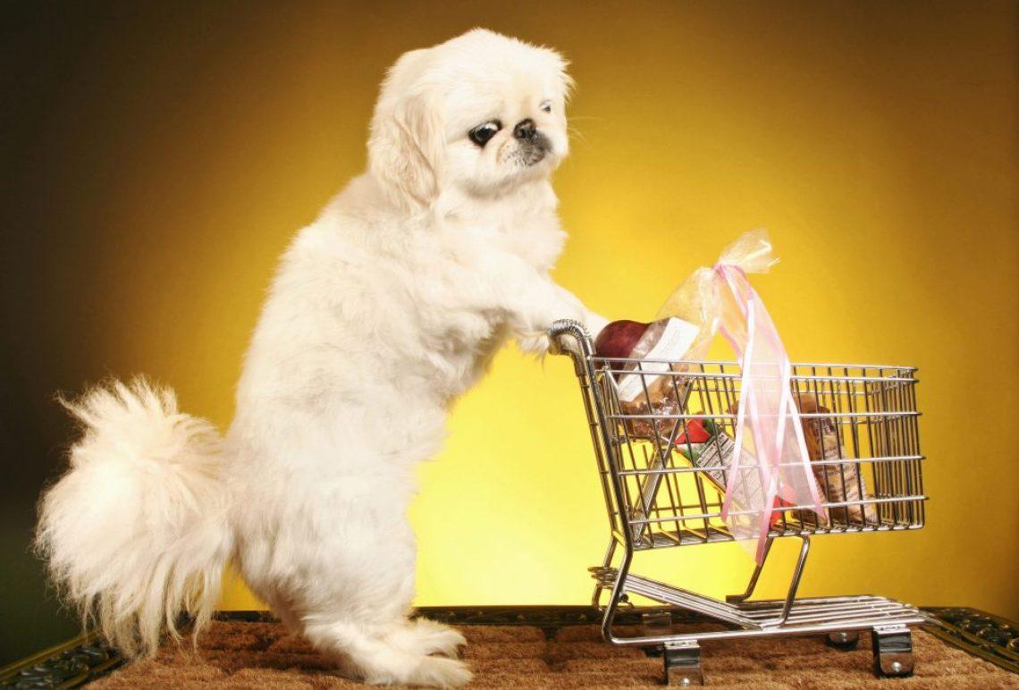 Dog pushing a shopping trolley