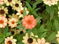 Orange and Yellow Flowers