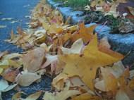 Crunching Leaves