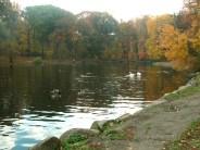 Shining Pond