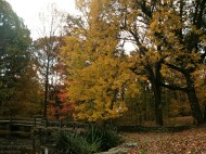 Nature in the Fall