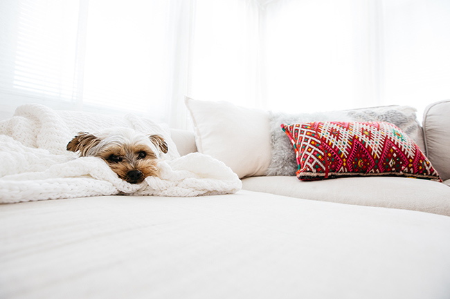 HOW TO ORGANIZED AN APARTMENT USING THE KONMARI METHOD // pretty apartment decor // minimalist style // white interiors // living room California style // puppies // SimplySpaced.com