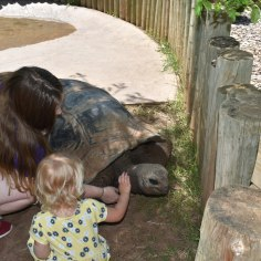 Victoria petting a giant tortoise.