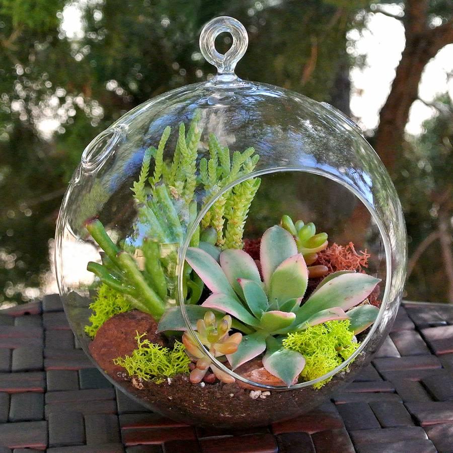 Miniature Succulent Plants Sale
