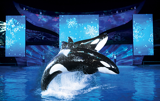 SeaWorld Christmas Celebration One Ocean