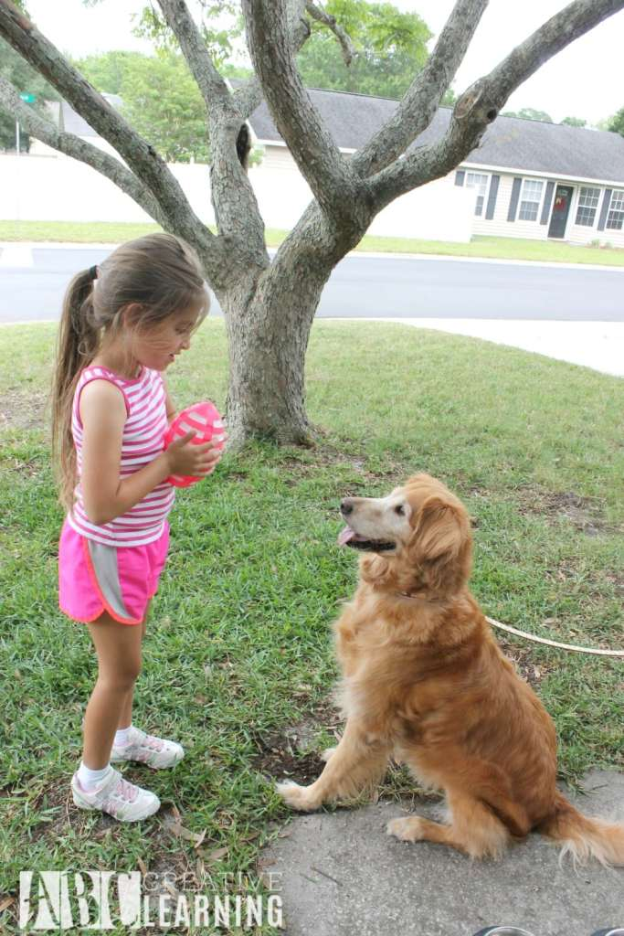Tips For Making Summer the Best For Your Pets Play