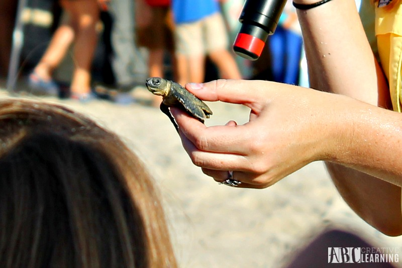 Teaching Our Youth To Take Care Of The Earth   Tour de Turtles at Disney's Vero Beach Resort - Baby Turtles