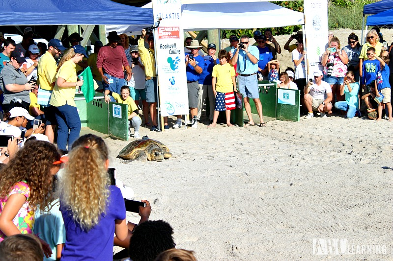 Teaching Our Youth To Take Care Of The Earth   Tour de Turtles at Disney's Vero Beach Resort - Turtles Return to The Oeans