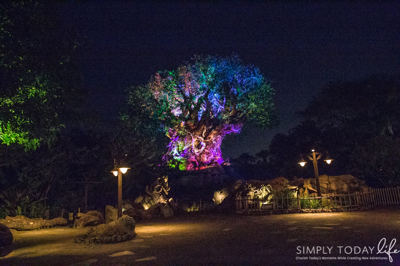 The Tree of Life at Animal Kingdome at Night
