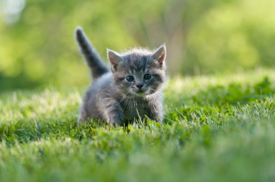 free kittens for all clients this month*