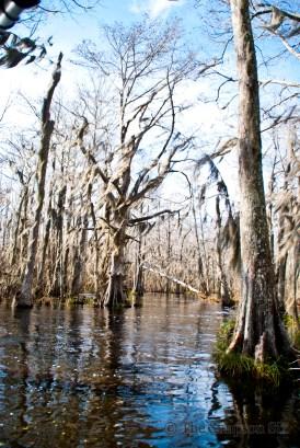 swamp tour 2