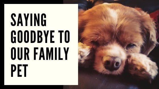 Saying Goodbye To Our Family Pet
