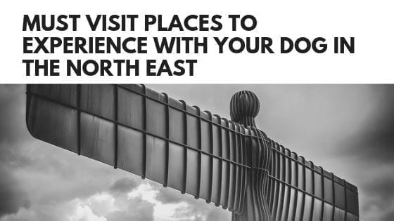 Must Visit Places To Experience With Your Dog In The North East