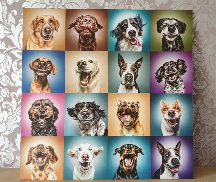 Posterlounge review Funny Dog Faces art