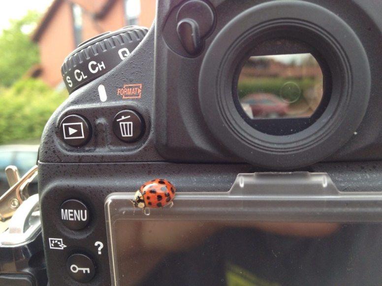 mein neuer fotoassistent