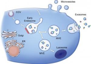 Proyecto de investigación biogenesis