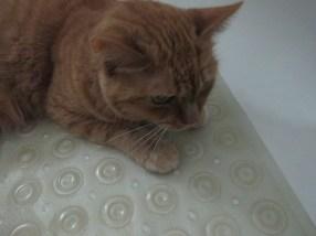 Bathtub with sulking cat in it.