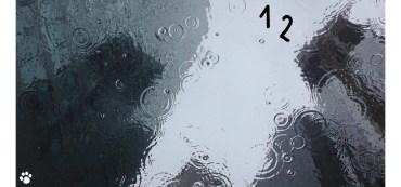 Eine Pfütze, in der sich verschwommen Wolkenkratzer spiegeln. Die Zahl Nummer 12 treibt im Wasser.