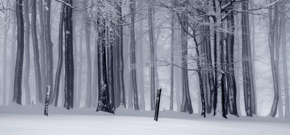 Denn wir sind wie Bäume im Schnee …