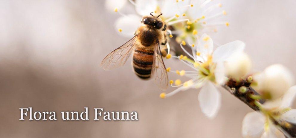 [Worldbuilding] Flora und Fauna – Ein erster Überblick