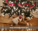 kitten laying under christmas tree with text overlay: sincerelychristi.com