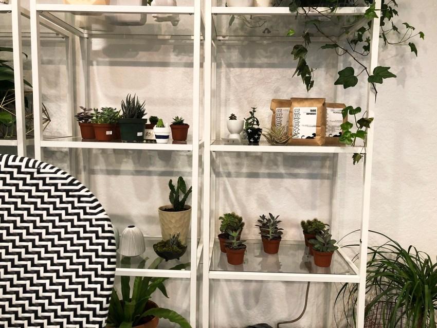 Paloma Cacti