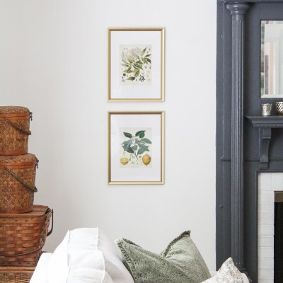 Vintage Botanical Prints & My Secret to Hanging Photos Perfectly