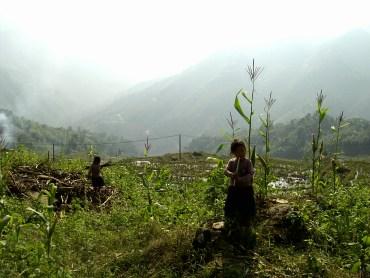 Terrazas de arroz de Sapa - Niña comiendo caña de azúcar