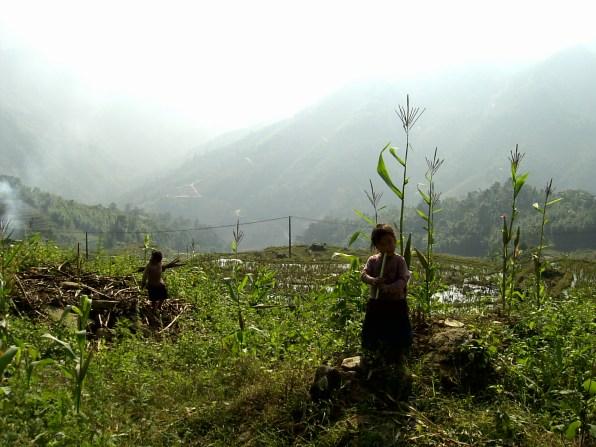 PIC02718 - Terrazas de arroz de Sapa, lo mejor de nuestro trekking de 2 días