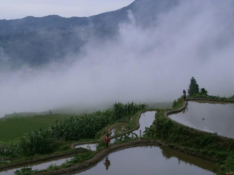 P6107116 - Las espectaculares terrazas de arroz de Yuanyang