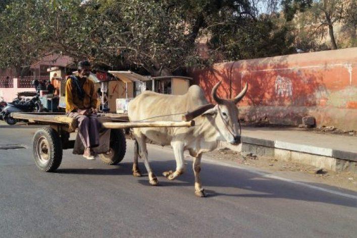 Bikaner Cebú 500x333 - Bikaner y el Templo de las Ratas: mitos y supersticiones
