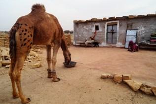 Jaisalmer Safari desierto Thar 01 - Lo mejor de Jaisalmer y el desierto del Thar; safari de dos días