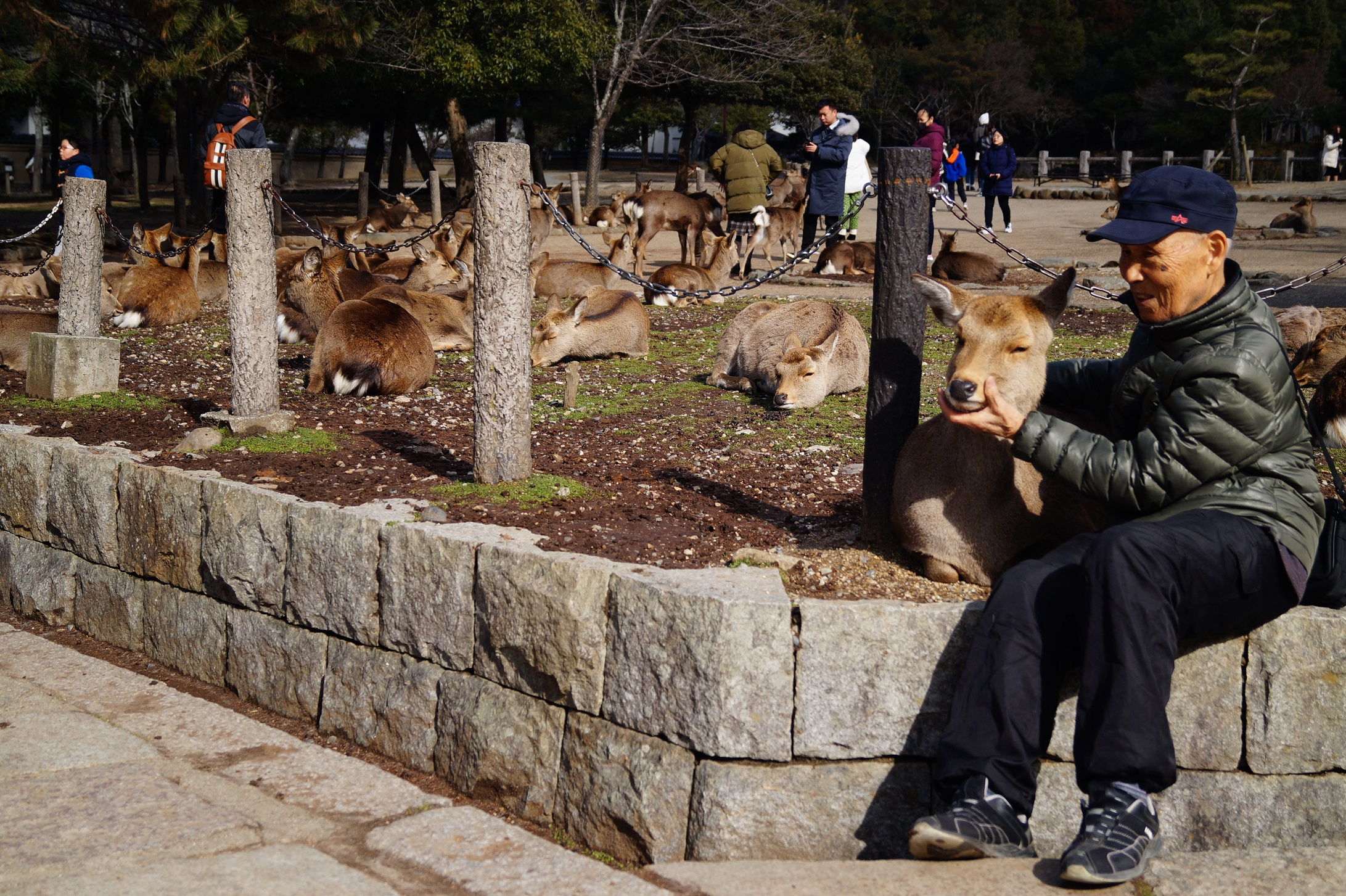 Nara La ciudad de los ciervos - Nara Park and the Sacred Deer of Japan