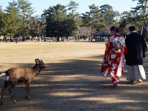 Nara - Parque de Nara - Vestidos tradicionales