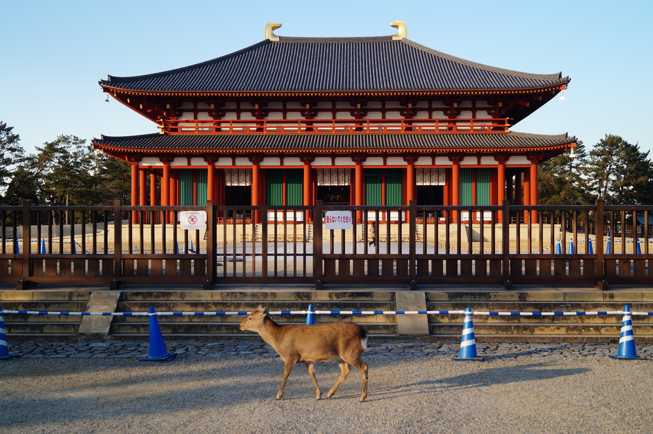 Nara Templo Parque de Nara - Nara Park and the Sacred Deer of Japan