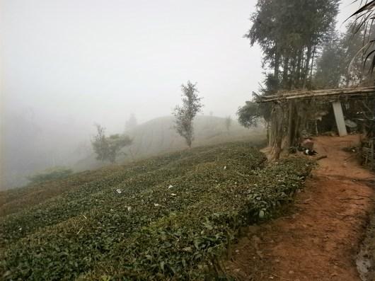 Viaje Yunnan Campos de té de Puer - Visitando los campos de té de Puer en Yunnan