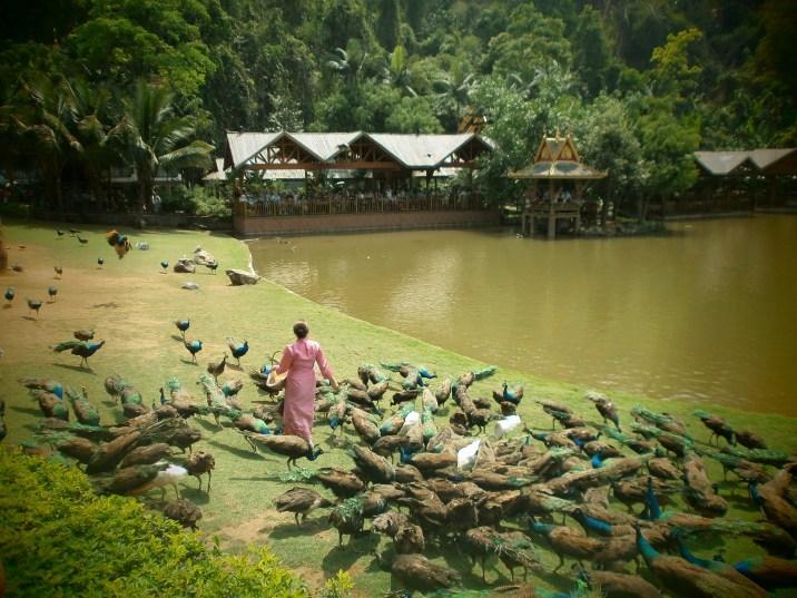 Xishuangbanna - Peacock Park