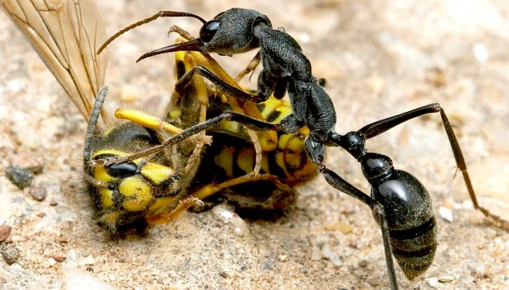 ant-men and the wasps ant-man & wasp ants marvel
