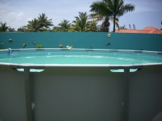 fische mit pool