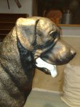 Dekofigur Rottweiler