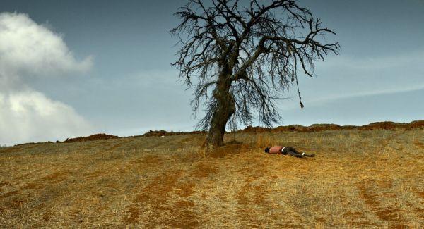 Ahlat Ağacı 1