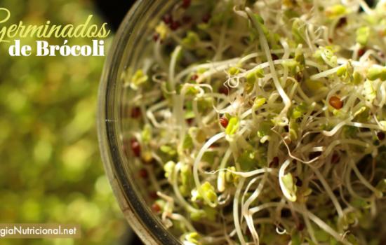 Germinados de Brócoli: una bomba de nutrición