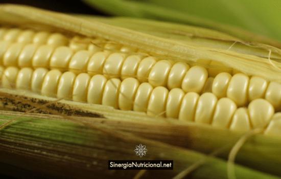 ¿Es seguro consumir maíz?