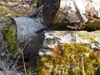 Wald_Struktur+Textur_1