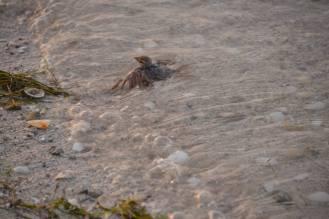 sparrow6