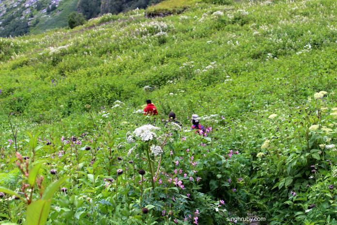 A walk in the Valley of Flowers.